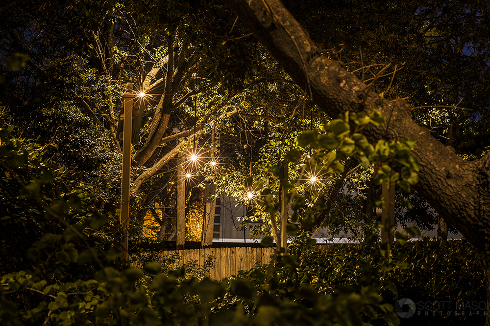 a nighttime photo of Firefly hanging lights, framed by trees and branches